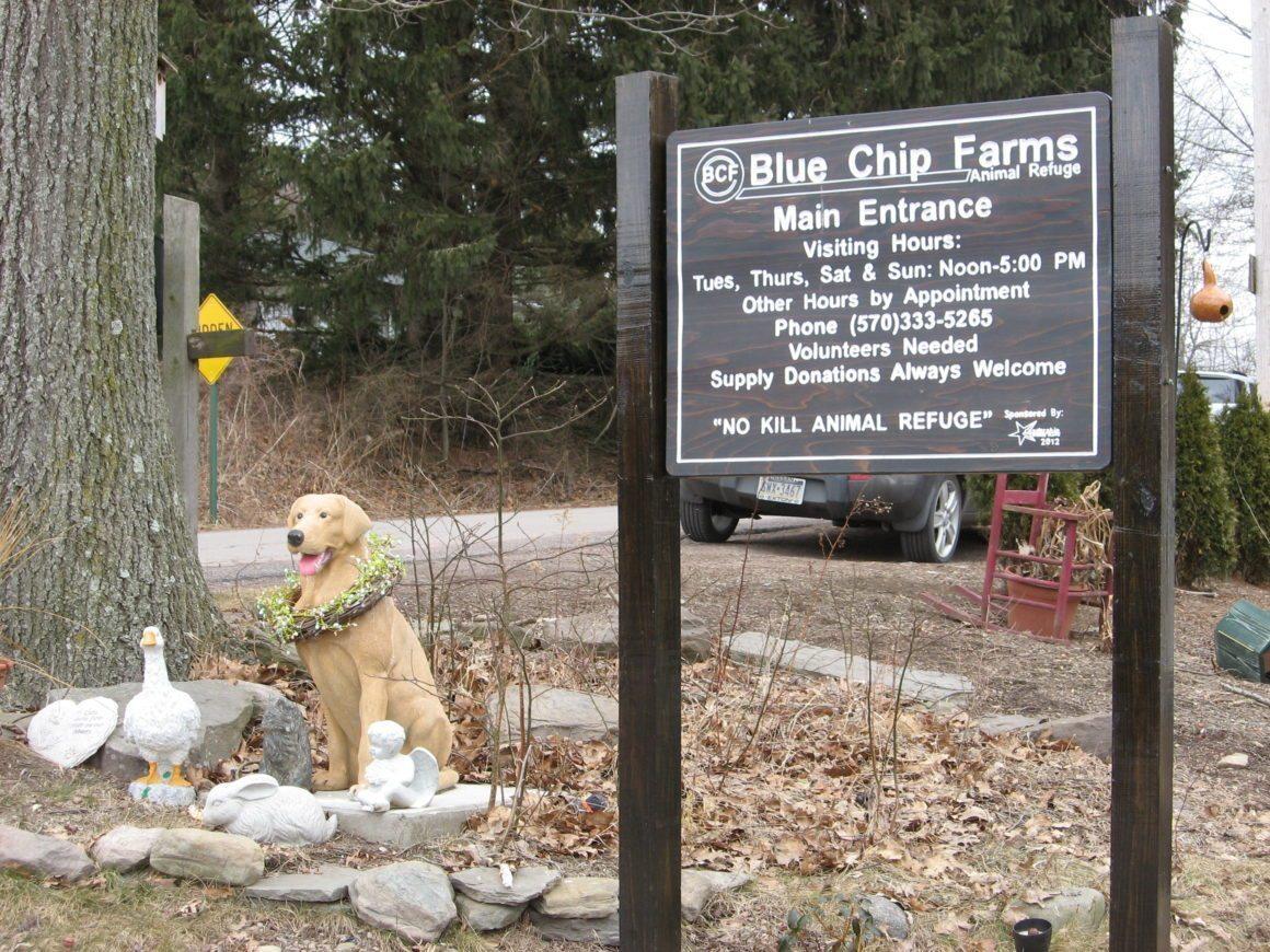 Sundance Vacations' Employees Volunteer at Blue Chip Animal Farm