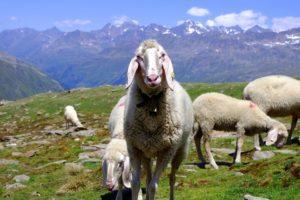 sundance-vacations-packing-winter-trip-merino-wool