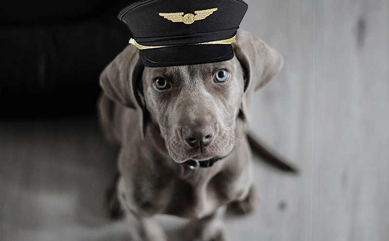 Airport Therapy Dogs, The Way to Get Rid of Anxiety?