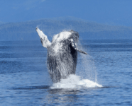 Sundance Vacations Whale watching