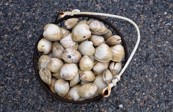 Top 5 Best Seafood Restaurants in Cape Cod, Massachusetts