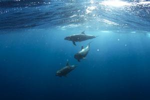 Sundance Vacations Hilton Head dolphins